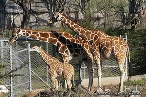 It's a baby boom: A look at the Indianapolis Zoo Babies ...