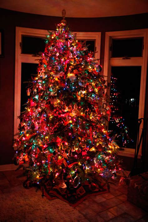 christmas tree coloured lights colored tree lights happy holidays