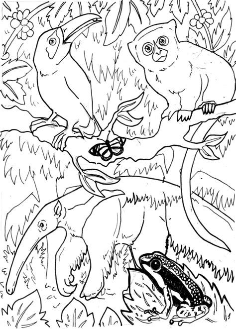 coloring pages of rainforest animals bestofcoloring