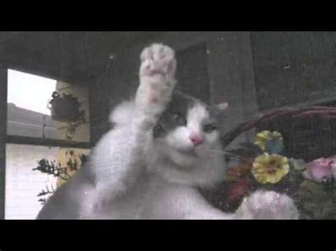 Killer Cat Attacks Mailman Youtube