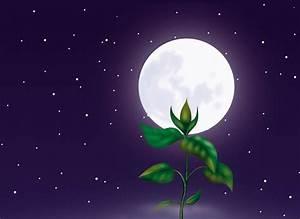 Jardiner Avec La Lune : comment jardiner avec la lune ~ Farleysfitness.com Idées de Décoration