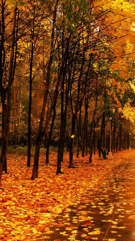 Android Hd Autumn Wallpapers by Yellow Forest Autumn Best Hd Wallpapers For Iphone And