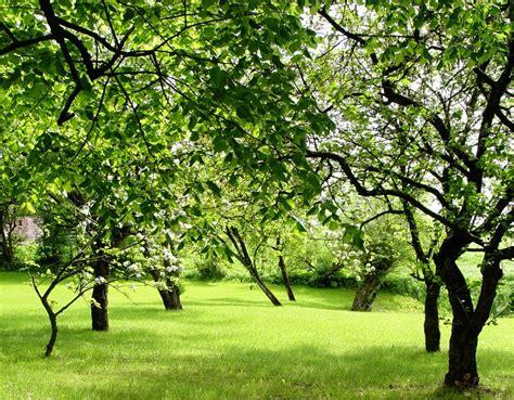 Garten Gestalten Obstbäume by Aprikosenbaum Im Eigenen Garten Alles Rund Um