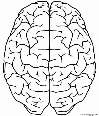 Coloring Brain Side Printable