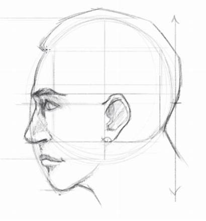 Draw Face Side Drawing Proportions Facial Sketch