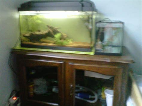 quel neon choisir pour aquarium quel aquarium choisir
