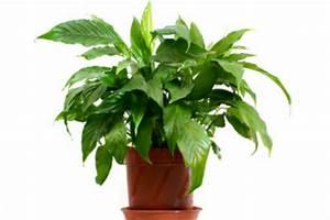 Schimmel In Pflanzen : wenn sich in der hydrokultur schimmel bildet so gehen sie dagegen vor ~ Bigdaddyawards.com Haus und Dekorationen