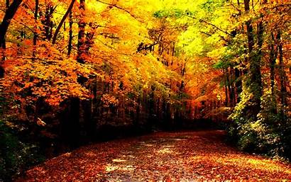 Autumn Wallpapers Fall Forest Path Resolution