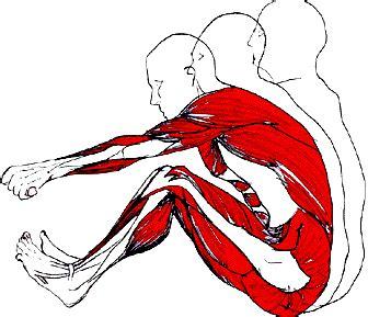 les bienfait du rameur muscu maison