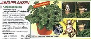 Verpiss Dich Pflanze : fansite f r fiese faule katzen lachnummer ~ Orissabook.com Haus und Dekorationen