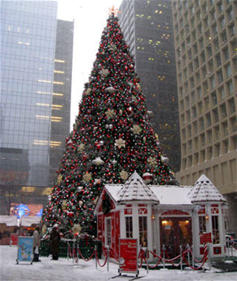 americas tallest christmas trees page  articles