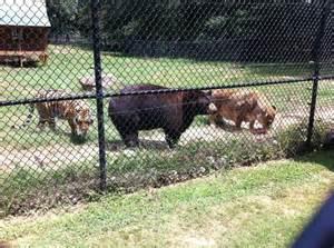 Noah's Ark Animal Habitat