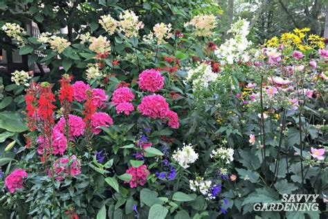Cottage Garten Pflanzen by A List Of Cottage Garden Plants The Ultimate Guide