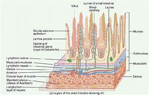 20  The Anatomy  Histology And Development Of The Small