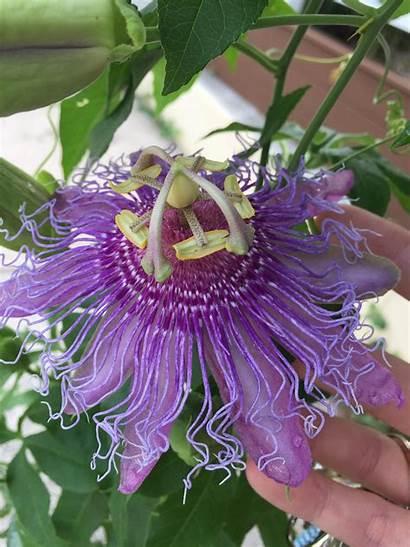 Purple Flower Alien Jooinn Any Web Found