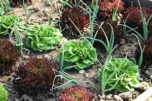 Mischkultur Im Garten : mischkultur im garten und auf dem balkon tinto bloggt ~ Orissabook.com Haus und Dekorationen