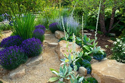 xeriscaping drought proof landscape design sacramento