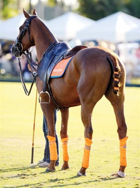polo horses horse pretty club rules pony palm beach international classic magazine equestrian equine lapolo boys india tack riders regulations