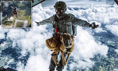 colombian air force dog completes  parachute training