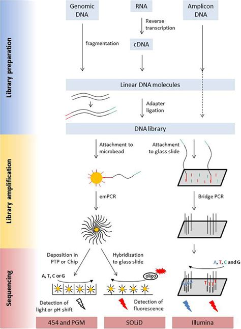 illumina next generation sequencing frontiers analysis of plant microbe interactions in the