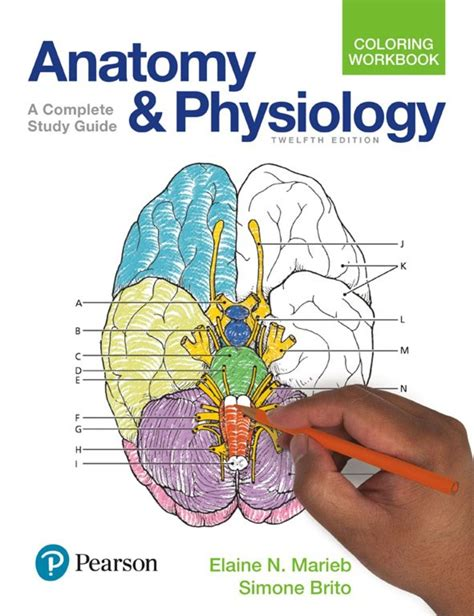 calameo anatomy  physiology coloring workbook