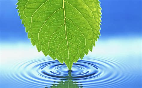 Blue And Green Wallpapers Wallpapers Green Leaf Wallpapers