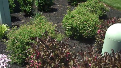 small bushes for flower beds flower beds shrubs bushes chris orser landscaping youtube