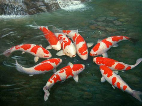 Animated Koi Fish Wallpaper - the gallery for gt koi pond wallpaper
