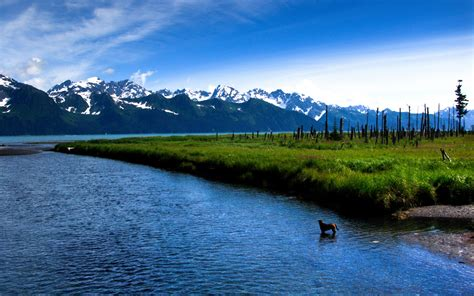 peaks blue river dog meadow wallpapers peaks blue river dog meadow stock