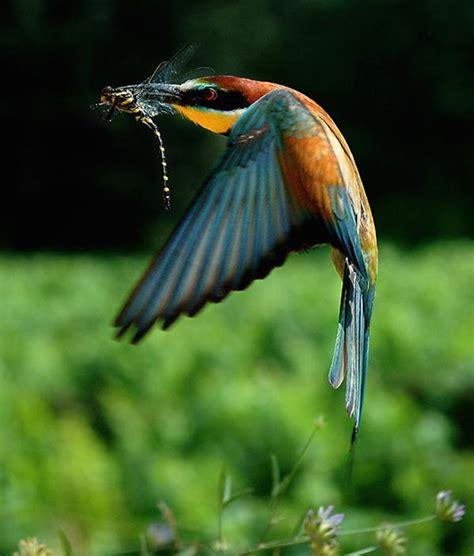 Krāšņi putni - Cocoblog