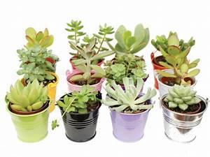 Entretien Plantes Grasses : entretien des plantes grasses pour les d butants le blog arr e succulentes ~ Melissatoandfro.com Idées de Décoration