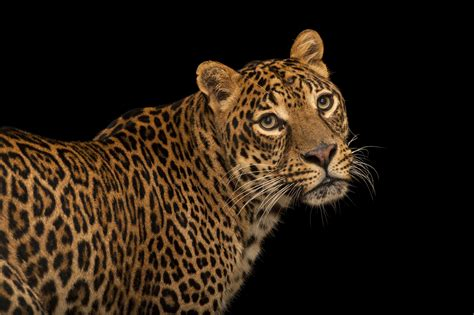 Will Africa's Big Five Become Extinct In The Wild
