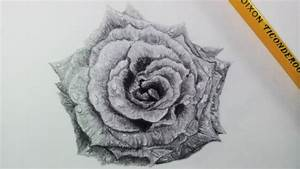Drawing A Realistic Rose - Time Lapse
