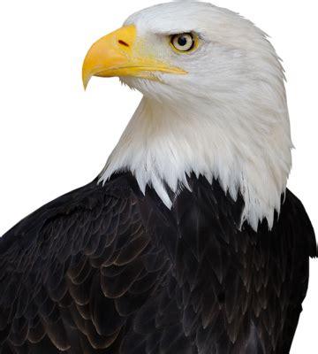 bald eagle transparent background  background check
