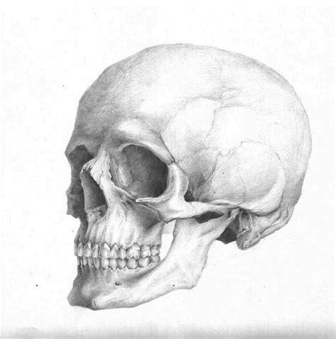 Skull Reference Pinterest Drawings Skulls