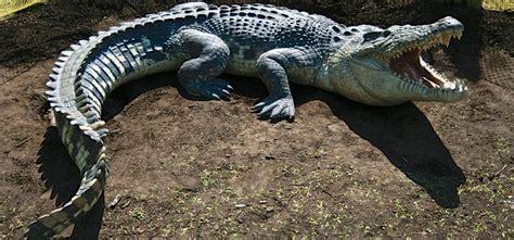 Crocodile | Animal Planet's The Most Extreme Wiki | FANDOM ...