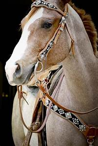 Cutting western quarter paint horse appaloosa equine tack ...