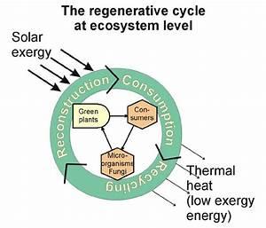 The regenerative cycle