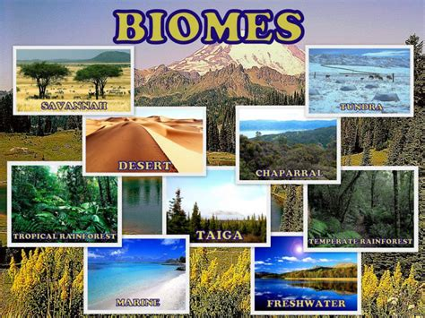 Types Of Ecosystems Hubpages