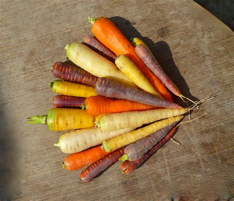 cuisiner des carottes nouvelles où trouver des carottes de couleurs variées jardissimo