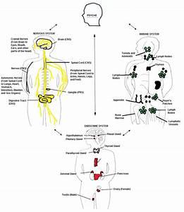 Homeostasis-of-human-body-diagram