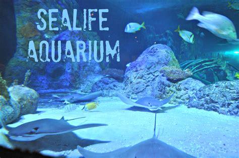 sea aquarium grapevine coupons buca di beppo coupon