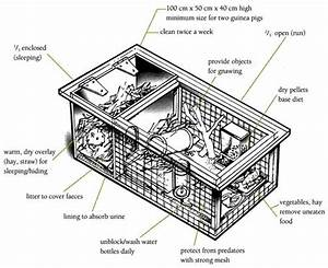 Hutch Diagram    Guinea Pigs    Animal Care    Caring For Animals    Ethics    Teaching Science