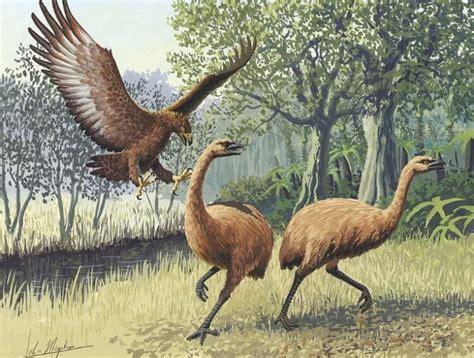 # foto | Jaunzēlandē atradās senas milzu putna pēdas bez ...