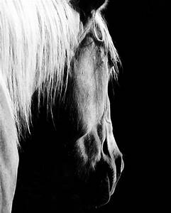 Black and White Horse Photography Print Equestrian Art ...