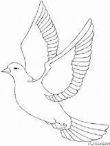Oiseaux Coloriage Coloriages 1847 Animaux sketch template