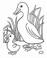 Coloring Pages Duckling Duck Baby Ducks Cute Cartoon Getcoloringpages Five Ugly sketch template