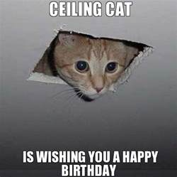 birthday cat meme cat happy birthday memes trolls cat birthday memes