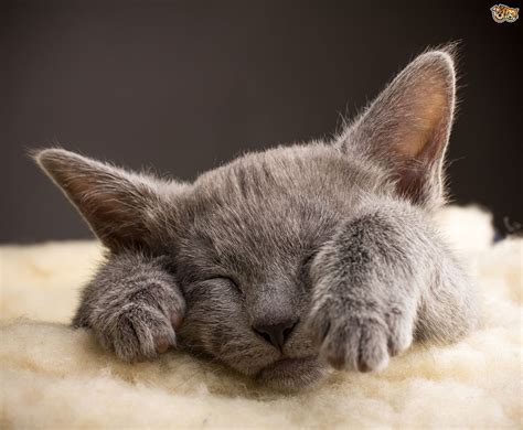 cats dogs better than pets why reasons sleep animal facts ten know animals brain debate pet pets4homes blowing mind did