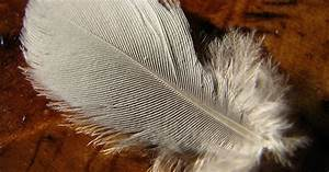 Can down feather pillows be washed dried ehow uk for Drying feather pillows